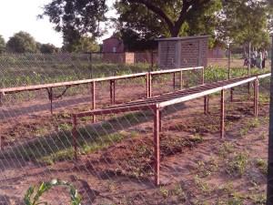 Mangosetzlinge und Solarmodule