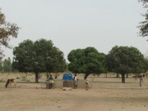 Mangobäume mit Brunnen