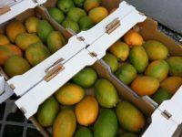 Lecker Mangos aus Burkina