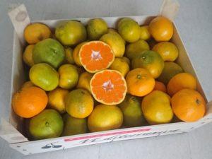 Mandarinenkiste von oben