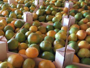 gestapelte Mandarinenkisten