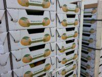 Mango-Kisten gestapelt
