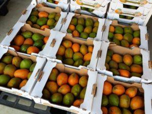 Leckere Mangos