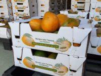 Mangos gestapelt