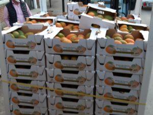 Mango-Verladung